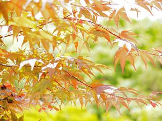 近くの植物のアップ - No.709693