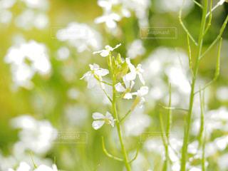 近くの花のアップの写真・画像素材[709694]