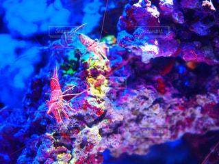 近くに魚のアップの写真・画像素材[709831]
