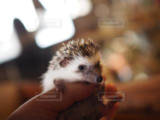 小動物を持っている手 - No.709877