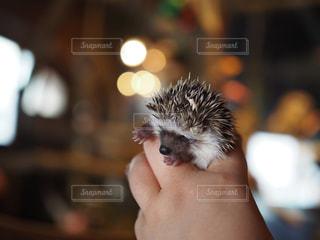 カメラを見て齧歯動物の写真・画像素材[710737]