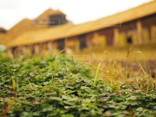 近くに緑のフィールドのの写真・画像素材[711424]