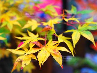 近くの木のアップの写真・画像素材[711430]
