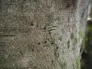 近くの木のアップの写真・画像素材[713823]