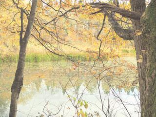 フォレスト内のツリーの写真・画像素材[713825]