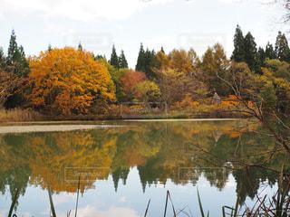 水の体の横にある池の写真・画像素材[713826]
