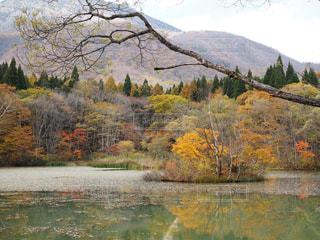 木々 に囲まれた水の体の写真・画像素材[713827]