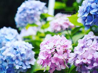 近くの花のアップの写真・画像素材[716417]