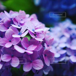 近くの花のアップ - No.716418