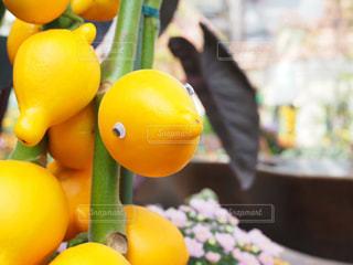 テーブルの上のオレンジのボウルの写真・画像素材[717820]