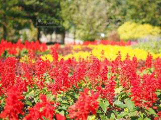 近くの花のアップの写真・画像素材[717924]