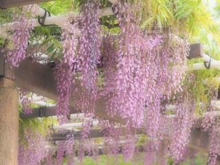 近くのフラワー ガーデンの写真・画像素材[730494]