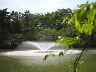 水の体の写真・画像素材[730497]