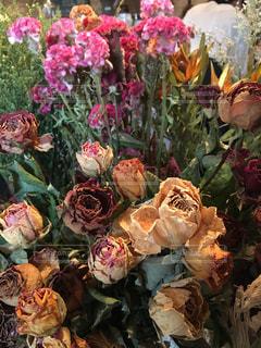 近くの花のアップ - No.792000