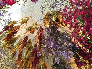 木の花の花瓶の写真・画像素材[792001]
