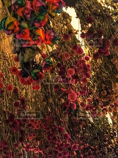 色とりどりの花のグループの写真・画像素材[792006]