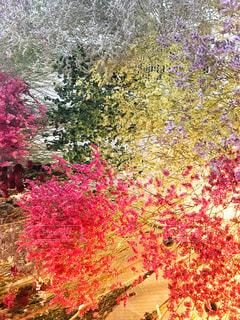 ピンクの花の木の写真・画像素材[792019]
