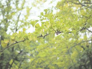 木の枝にとまった鳥の写真・画像素材[821477]