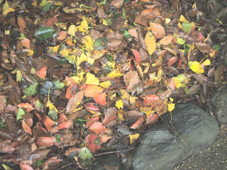 葉の山の写真・画像素材[821478]