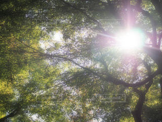 近くの木のアップの写真・画像素材[849447]