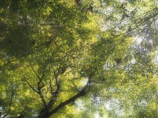 近くの木のアップの写真・画像素材[849448]