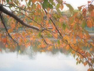 近くの木のアップの写真・画像素材[871773]
