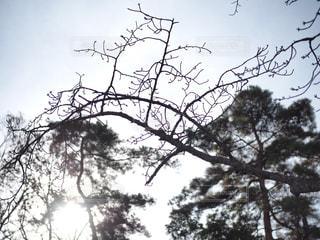 大きな木の写真・画像素材[916473]