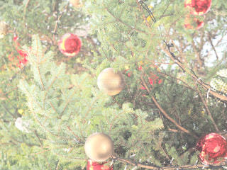 木からぶら下がってりんごの写真・画像素材[933816]