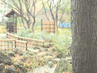 近くの木のアップの写真・画像素材[933819]