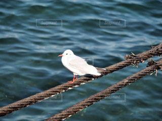 水の体の横に鳥立っての写真・画像素材[933831]