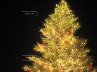 木のぼやけた写真の写真・画像素材[933874]