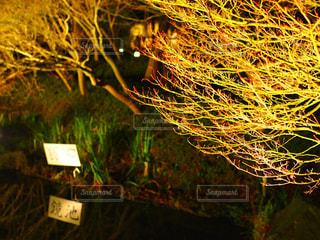 近くの木のアップの写真・画像素材[952730]