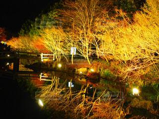 近くに池のアップの写真・画像素材[952733]