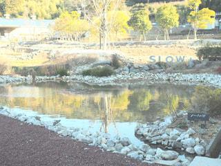 近くに池のアップの写真・画像素材[995109]