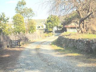 未舗装の道路の真ん中の木の写真・画像素材[995114]
