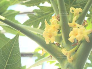 近くの植物のアップの写真・画像素材[995404]
