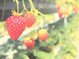 近くに果物の - No.995411