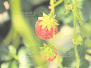 近くの花のアップ - No.995415