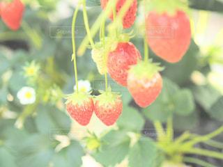 近くの花のアップの写真・画像素材[995416]