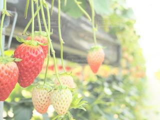 近くに果物の - No.995426