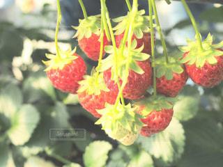 近くの花のアップ - No.995428