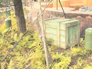 背景の木と家の写真・画像素材[1011015]