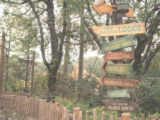 背景の木と道路標識の写真・画像素材[1011020]