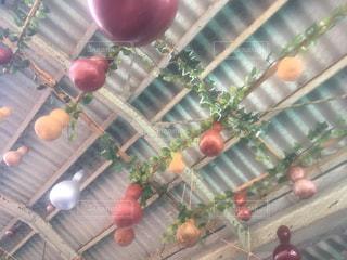赤いリンゴの写真・画像素材[1121657]