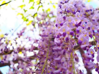 近くの花のアップの写真・画像素材[1135746]