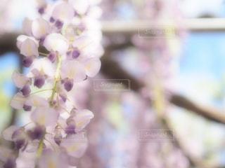 近くの花のアップの写真・画像素材[1135747]