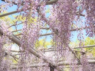 フォレスト内のツリーの写真・画像素材[1135749]