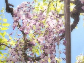 近くの花のアップの写真・画像素材[1135753]