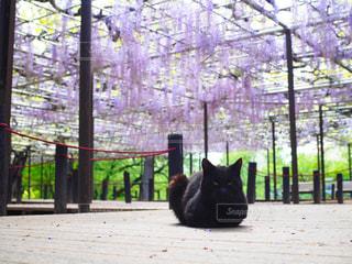 ベンチに座って黒い猫の写真・画像素材[1135756]