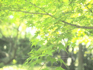 近くの木のアップの写真・画像素材[1155425]